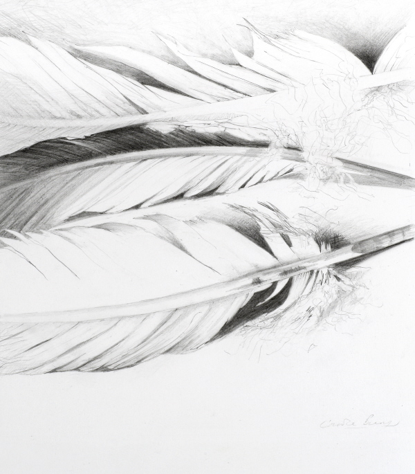 'Flight Feathers' pencil drawing